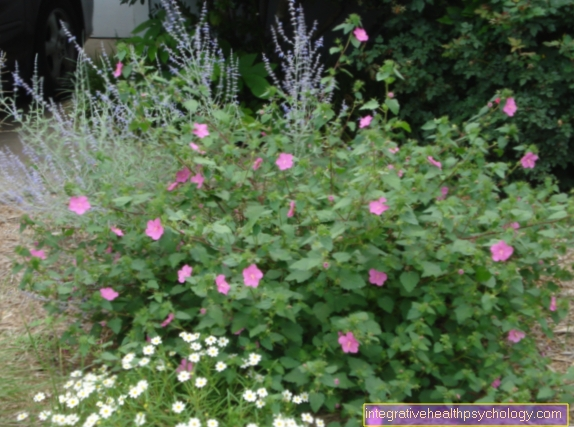 The Bach Flower Rock Rose