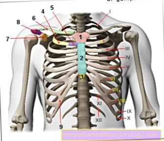 Gambar tulang rusuk