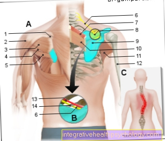 Figure shoulder blade pain