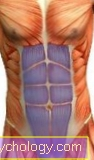 Straight abdominal muscle