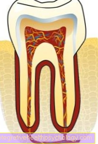 Tooth pulp (pulp)